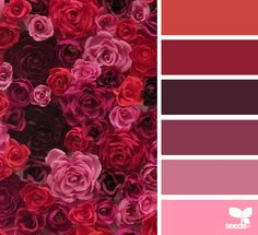 { paper flora } image via: @thelovelyave #color #palette #colorpalette #pallet #colour #colourpalette #design #seeds #designseeds #rose #roses #red