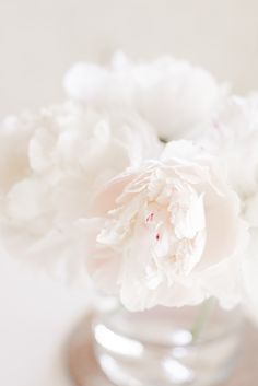 White Peonies in the Spring - Hej Doll Minimal Photography, Shabby Flowers, Flowers Vase, White Peonies, White Aesthetic, Flower Boxes, Soft Colors, Aesthetic Pictures, Flower Decorations