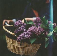 Gathering lilacs | photo by Anna Gawlak