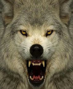 STOP WOLF HUNTS: WOLF PETITIONS (PLEASE SIGN & SHARE)