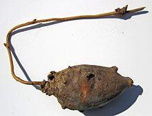 Apios americana, sometimes called the potato bean, hopniss, Indian potato, hodoimo, America-hodoimo, American groundnut,or groundnut