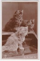 1931 On the Look Out CUTE Cats KITTENS Real Photo POSTCARD RPPC