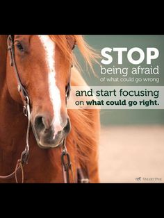 "Horse with inspirational quote: ""Stop being afraid of what could go wrong and start focusing on what could go right."""