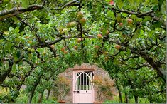 Beautiful garden gate with espaliered apple and pear trees