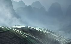 Rice fields - China