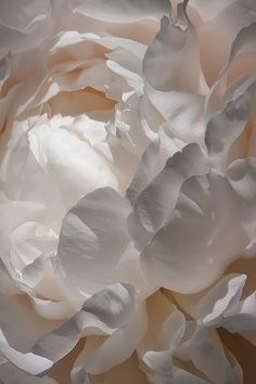 Super Ideas For Flowers Photography Peonies Texture Flower Backgrounds, Wallpaper Backgrounds, Iphone Wallpapers, Drawing Wallpaper, Trendy Wallpaper, White Wallpaper, Iphone Backgrounds, Wallpaper Pictures, Nature Wallpaper