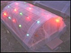 Plastic row cover with Christmas tree lights to keep a winter garden bed warmer