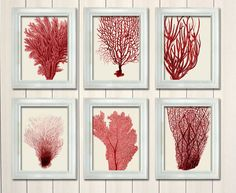 Set of 6 Red Coral Prints - Nautical print sea picture beach decor wall decor marine picture beach house bathroom decor nautical decor on Etsy, $55.00