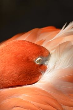 Photo of the Day: Flamingo