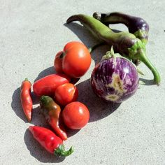 Container Harvest - August 23rd, 2012