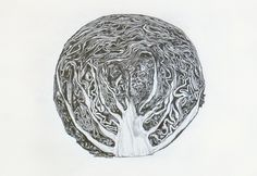 cabbage drawing - Nan Zhu