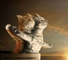 Kitty Titanic :)