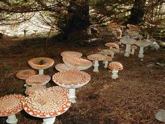 Amanita mushroom fairy ring