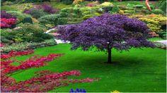 love purple tree!