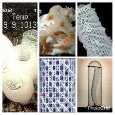 Glass Sponges Class Hexactinellida Tumblr Mqxsq07nfh1qaj00vo1 400 As Seen On David