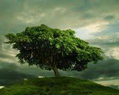 tree photos - Google Search