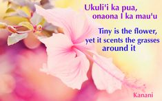 Hawaiian proverb