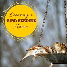 Creating a Bird-Feeding Haven Animal Activities For Kids, Outdoor Activities For Kids, Summer Activities, Wild Creatures, Nature Study, Fun Projects, Bird Feeders, Birds, Pets