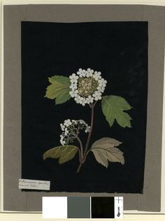 nickyskye meanderings: Mary Delany, collage artist of flowers in the Nature Illustration, Floral Illustrations, Botanical Illustration, Botanical Flowers, Botanical Prints, Create Collage, Chinoiserie Wallpaper, Paper Artwork, Collage Artists