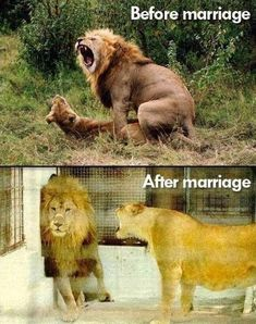 """The Funniest """"Before and After"""" Memes Ever   ViraLuck"""