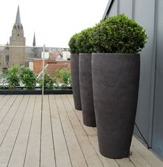 Box (Buxus sempervirens) planters on roof terrace