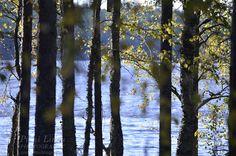 Lake and autumn trees