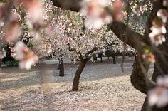 Parque de la Quinta de los Molinos, Madrid   Fotonazos Most Beautiful, Beautiful Places, Dream Vacations, Adventure, Plants, Outdoor, Instagram, Inspiration, Style