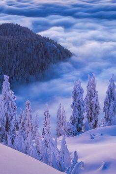 Winter beauty #photography
