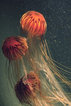 Red Jelly - Isnt this just breathtaking!