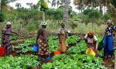 Maza Wanawake Kwanza Growers Association - Tanzania - community action for sustainability - CASwiki Tanzania, Kenya, Champs, Female Farmer, Community Events, Organic Farming, East Africa, Growing Vegetables, Halloween
