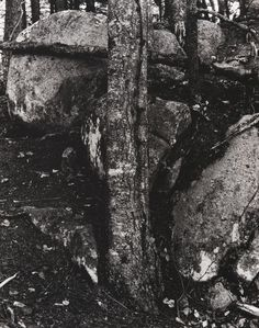 Paul Strand (American, 1890–1976), Woods and Rocks, Vermont, 1946 (negative) / 1960s (print), gelatin silver print, 9 5/8 × 7 5/8 inches. Philadelphia Museum of Art, The Paul Strand Retrospective Collection, 1915-1975, gift of the estate of Paul Strand, 1980-21-65. © Paul Strand Archive/Aperture Foundation