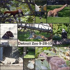 an analysis of the animal collection and the zoos major attraction Located in linked buildings at flatts village on the north shore, this triple-threat  attraction houses a range of animals and marine life in naturalistic environments.