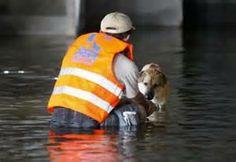 Animal Rescue - Bing Images