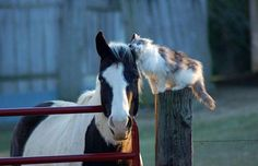 """Awww, sweet!! Best friends forever!! Love this pic so so very very much!! A really really beautiful at heart pic!! Looks like the horse is saying """"So what's going on here??"""" lol...cats' really REALLY like to do this...lol. Just brushing themselves against you all the """"TIME!!"""" lol :D. Love it!! Really really super beautiful pic!! :))    Pic via Pixdaus http://pixdaus.com/unnamed-horses-animals-fauna-gato-cats/items/view/284521/"""