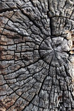 .A decaying tree stump. It's difficult to tell precisely ...