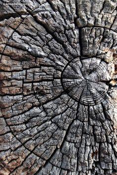 Die Raumfee: Holz . Wood