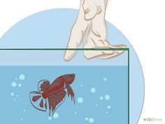 Article: How to Make a Betta Fish Live 4 Times As Long