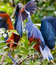 parques, santuarios y reservas nacionales e historicas del PERU - Buscar con Google