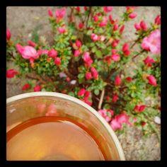 Dag294: echinea thee
