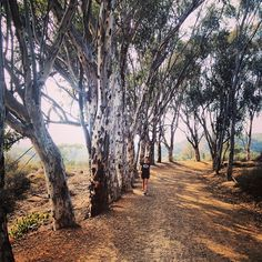 Will Rogers State Historic Park in Pacific Palisades, CA