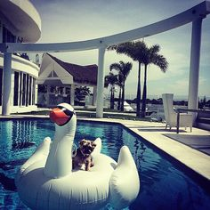 Rich Dogs Of Instagram: The Proof That Pups Live Better Than Humans | Bored Panda