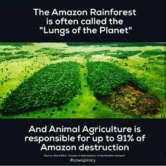 VEGANS FACTS ____________________________ #vegansfacts #vegan #vegano #plantbased #plantpowered #health #hclfvegan #veganism #veganlife #veganliving #compassion #noharmdone #nomeat #nondairy #noleather #crueltyfree #alkaline #alkalinevegan #healthylifestyle #healthyfood #veggie #vegetarian #healthy #herbivore #howtogovegan #whatveganseat #vegansofig #vegansofinstagram #veganfood #veganwarrior