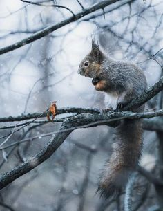 Tämän oravakuvan Munter otti talven 2017–18 ensilumilta.
