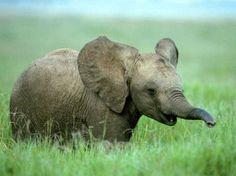 Un bebe elefante inocente tierno realmente Hermoso