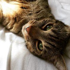 Dinja Katze | Pawshake