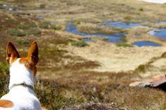 #Dog #Hund #Chien #Ascou #Ariège #3Lacs #Lake #Lac #PicdeTarbescou #Occitanie #TourismeOccitanie #Pyrénées #Mountain #Bergen #Montagne