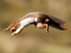 Woodland animal Olympics - Which animals would take gold?