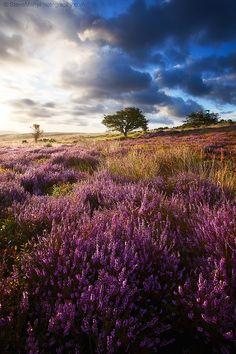 Porlock Purples (Exmoor, England) by Steve Mahy / Beautiful Photos Of Nature, Nature Photos, Beautiful World, Beautiful Places, Beautiful Scenery, England Top, Photo D Art, Meadow Flowers, England And Scotland