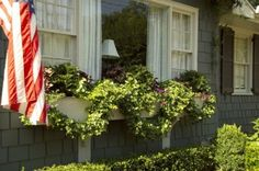 Frontyard: Windowbox for the picture window.  Love the draping topiary