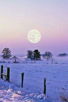 Serene lavender winter